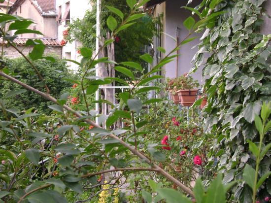 maisons derrière la verdure