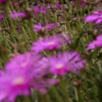 Les fleurs de plus près